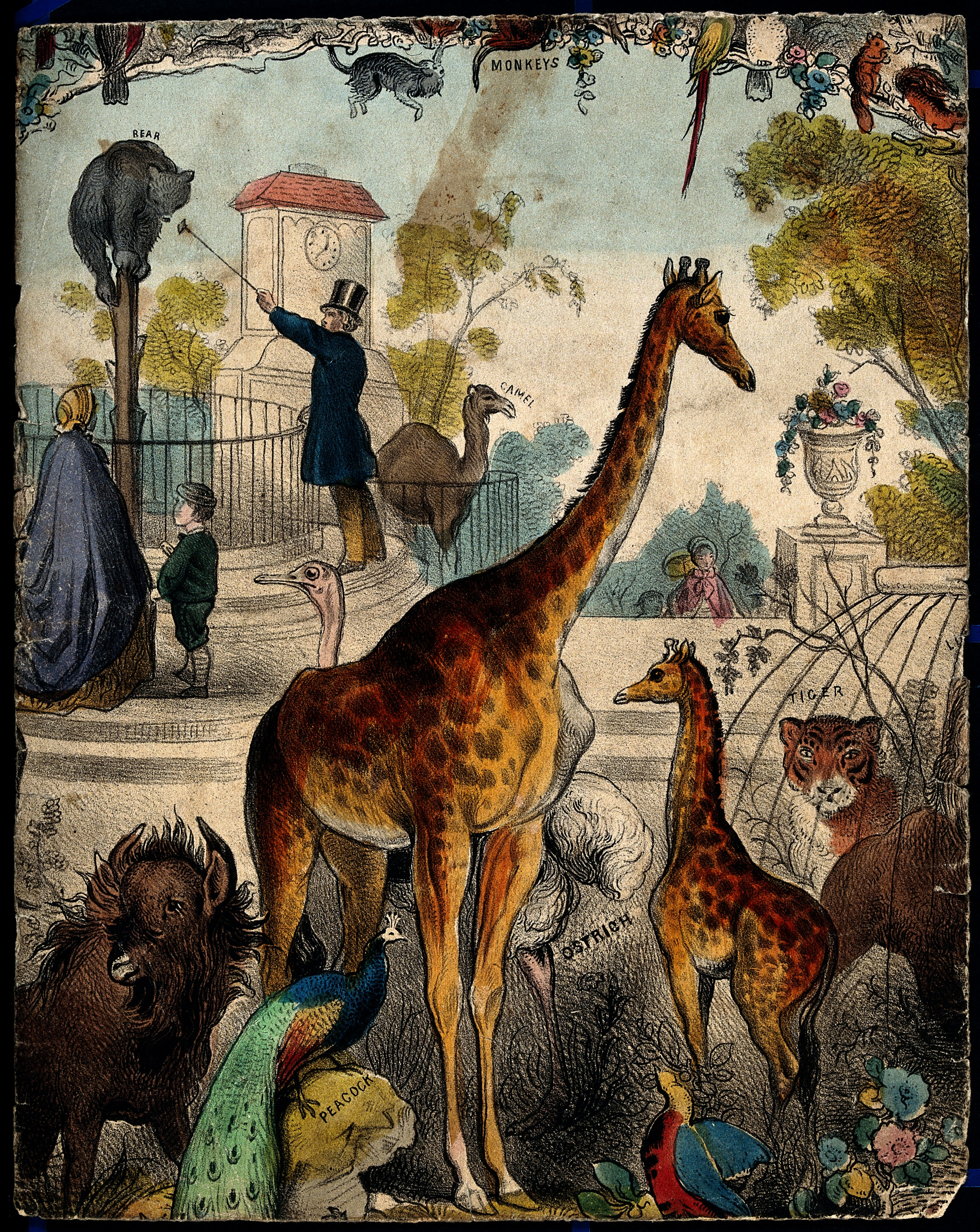 V0023154 A zoo with giraffes, tigers, and a peacock. Coloured lithogr
