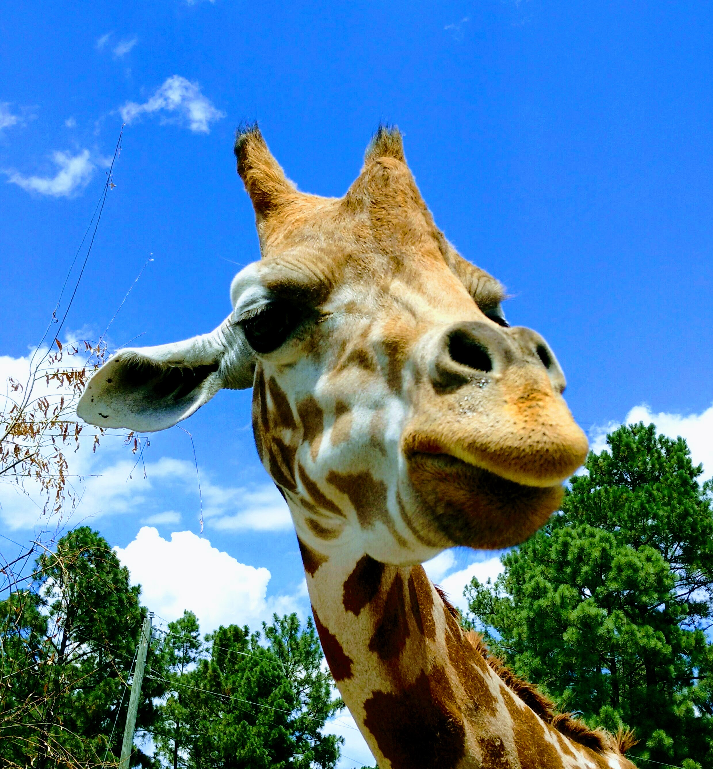 BlueSkyGiraffe