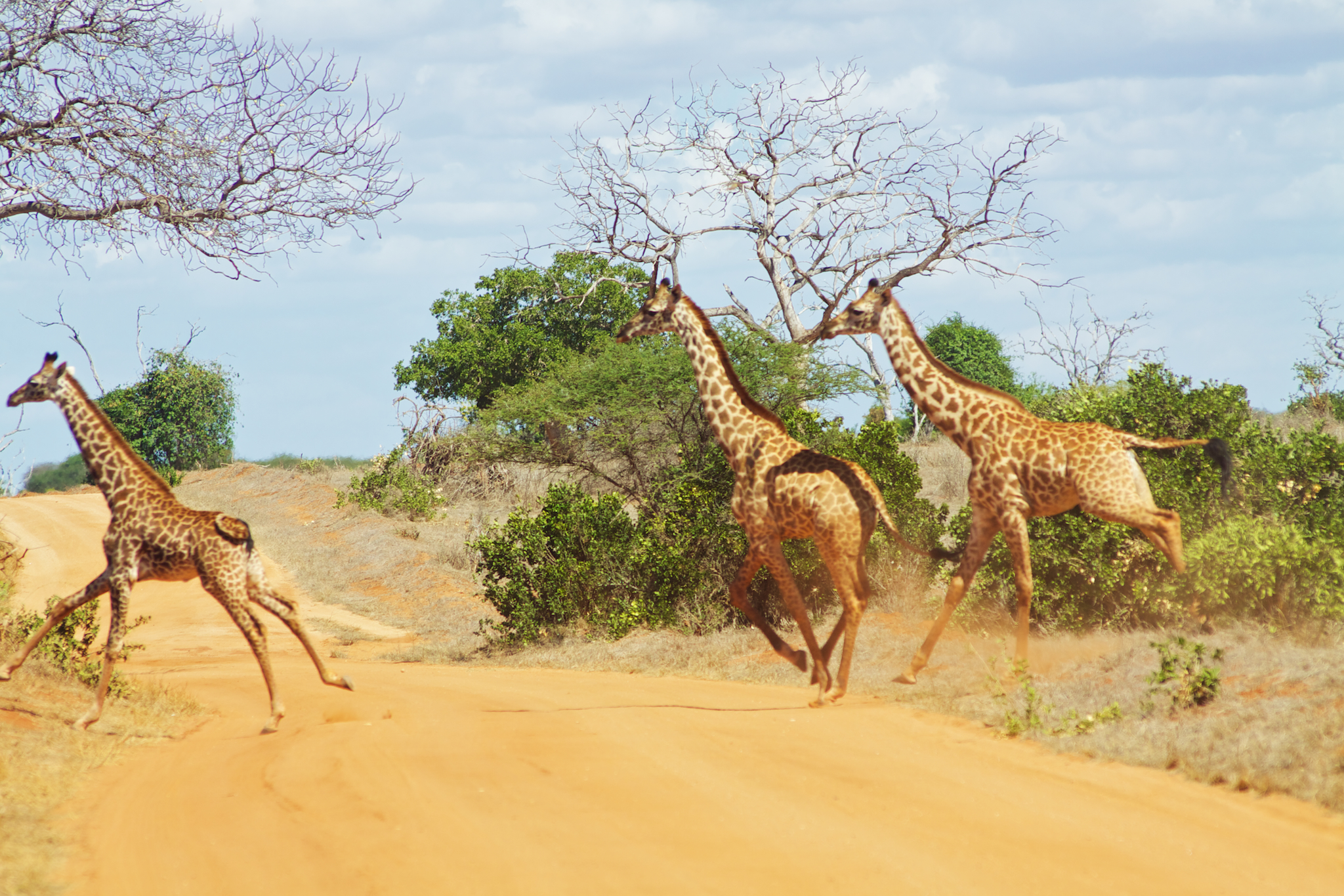 Why did the giraffe cross the road?