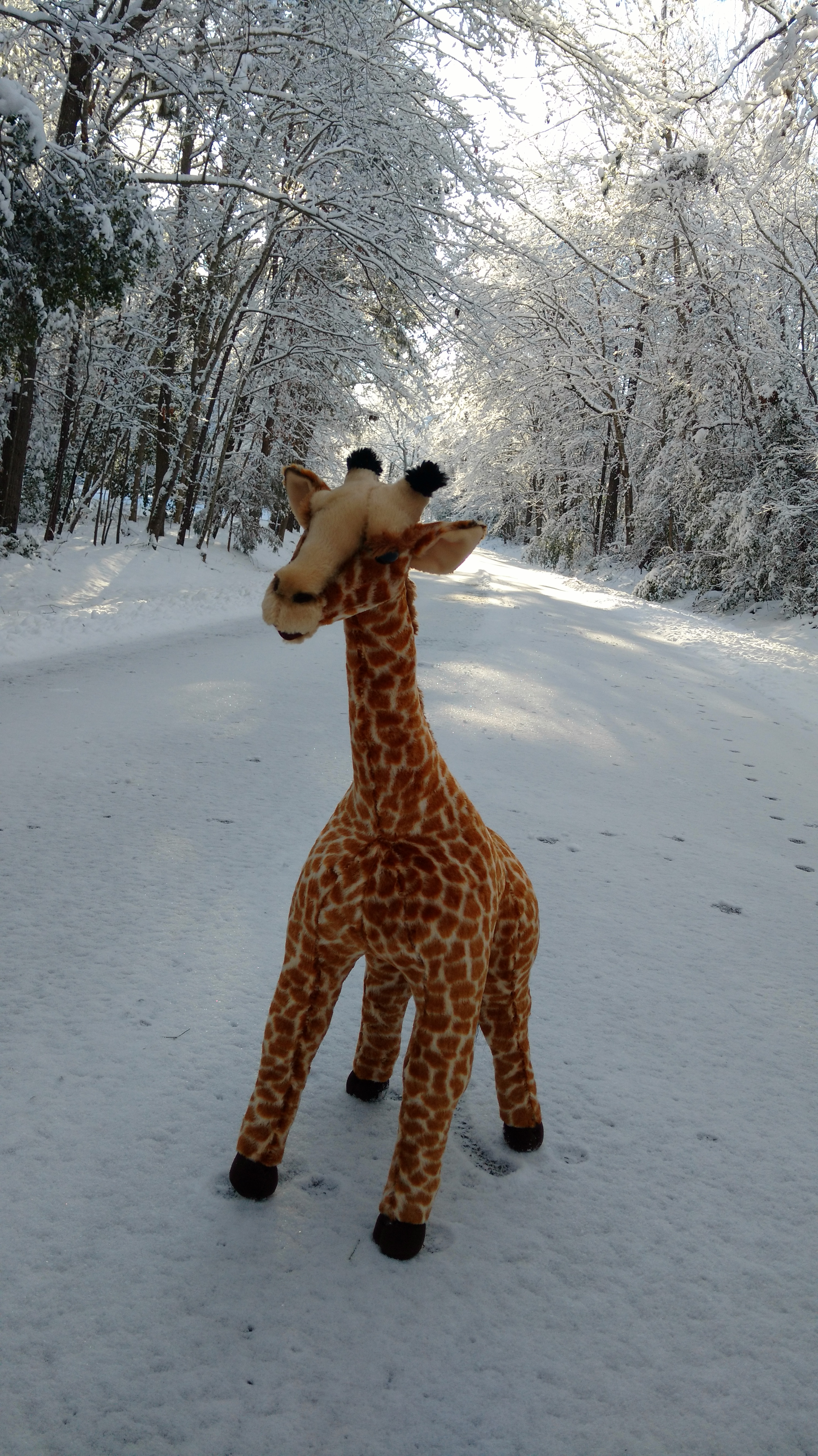 snowroadgiraffe